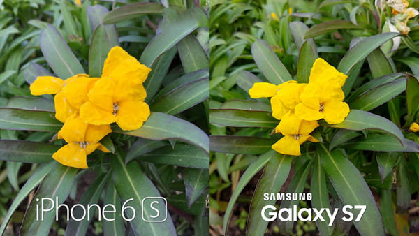 Samsung Galaxy S7 vs. iPhone 6s Apple Camera test